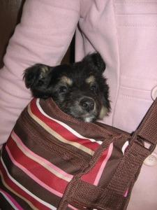 Georgie in mybag