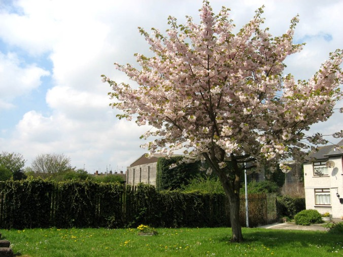 neighbourhood tree