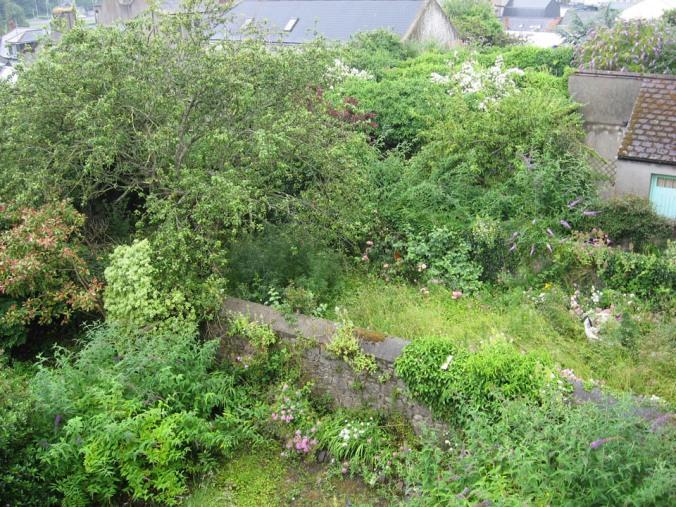 Overgrown Neighbours' Gardens