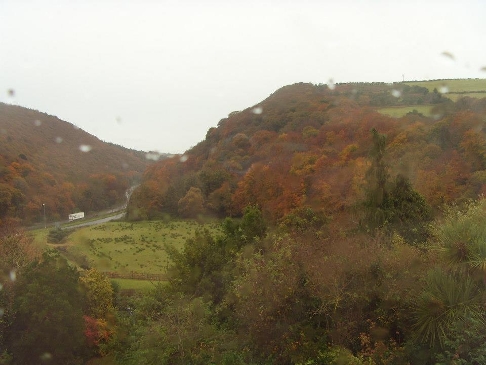 Leaves Rain Love View From An Irish Back Yard